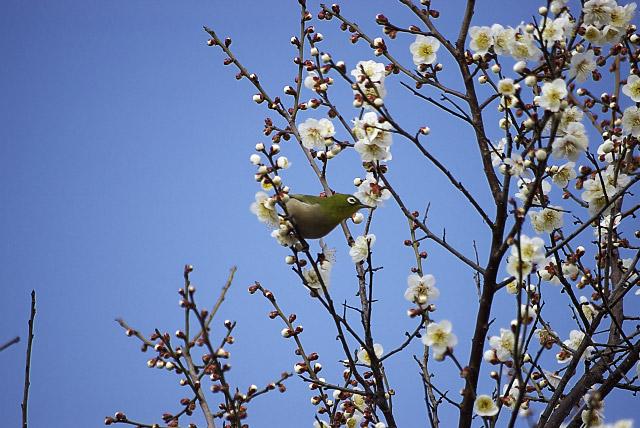 春の兆し_1