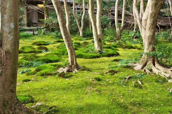 冬の京都行 (3)