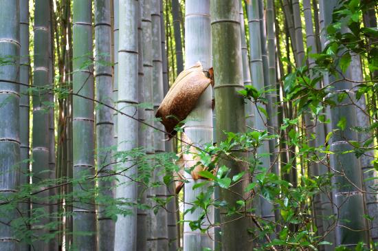 地蔵院 竹の寺