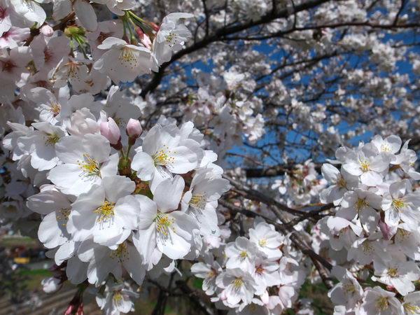 春だ~~♬