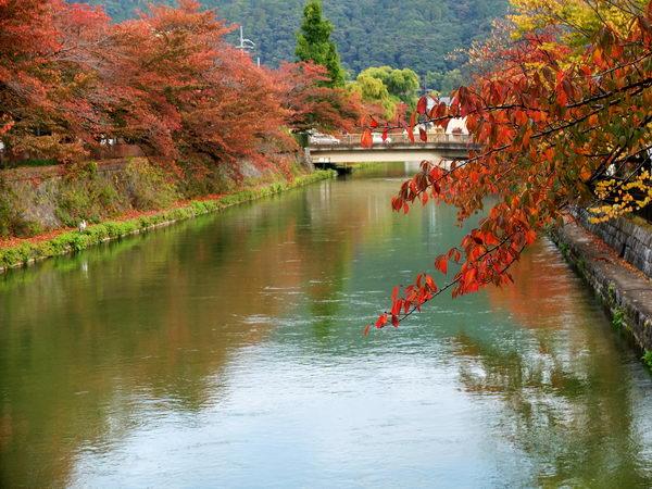 秋・京都疎水