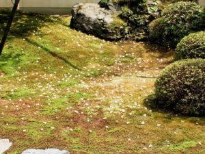 沙羅双樹 -1-_3