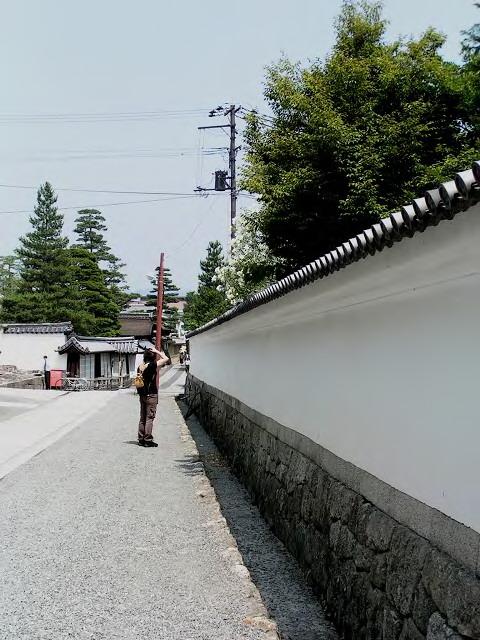 白い壁と白い花_1