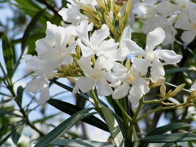 白い壁と白い花_2