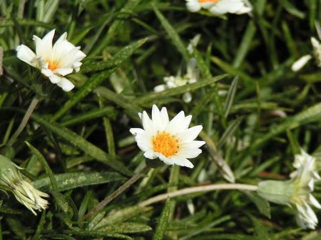 ご近所の花たち_3