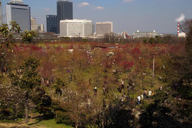 大阪城梅林 (1)_1