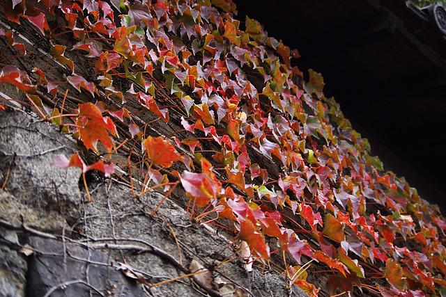 ここも、紅葉。