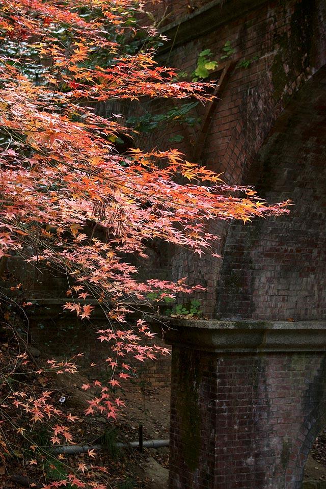 疎水橋と紅葉