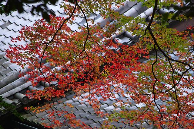 瓦の上の紅葉