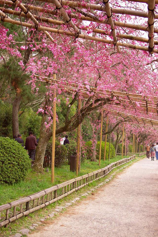 半木の道_1
