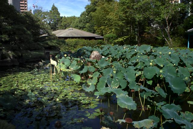 極楽浄土の庭 -2-_1