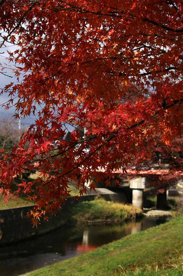 竜田川沿いの紅葉