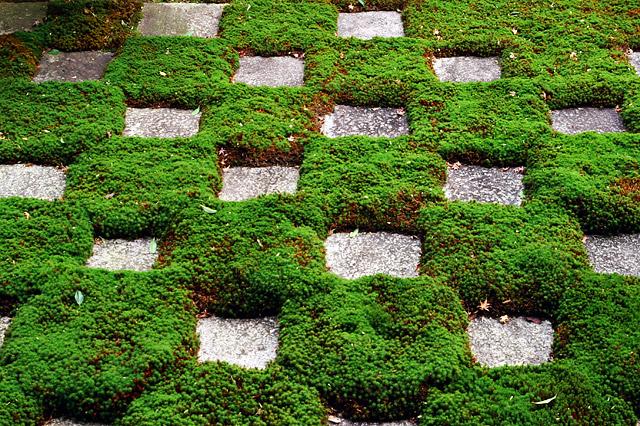 東福寺庭園 -4-_1