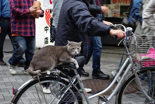チャリ猫_2