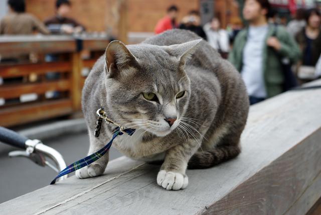 チャリ猫_3