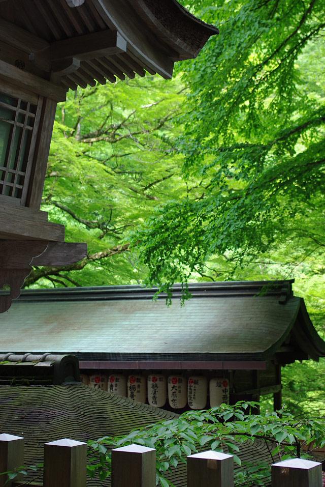 貴船神社の屋根_2