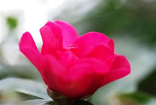 長居植物園の冬の花たち_1