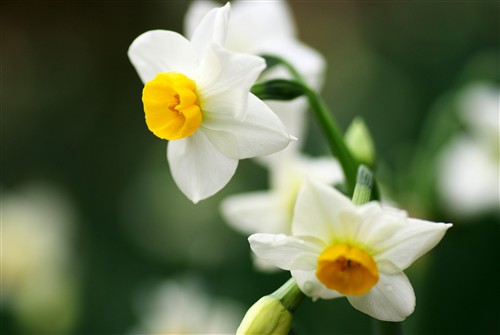 長居植物園の冬の花たち_2
