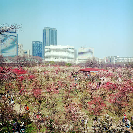 大阪城梅園_2013