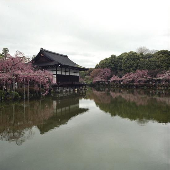 なごりの桜_2