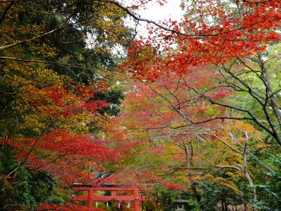 滋賀へ行ってきました。