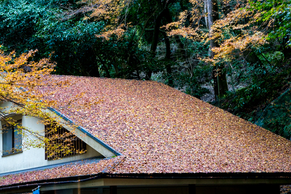 紅葉・屋根