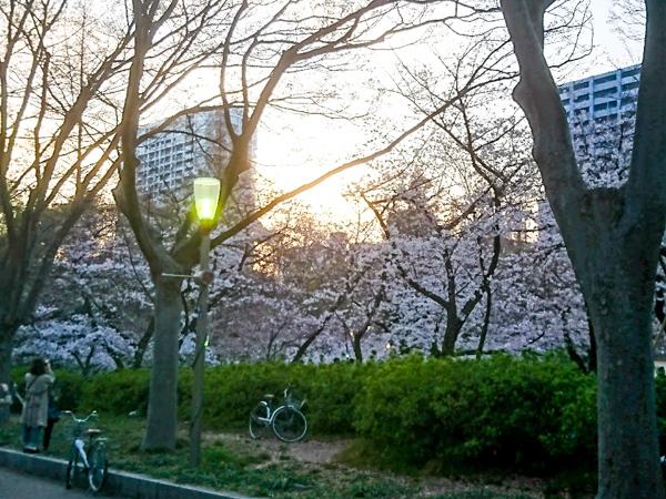 春が来た!!_2