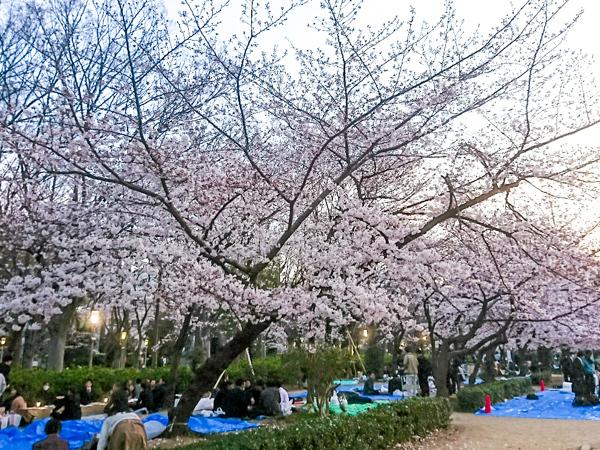 春が来た!!_3