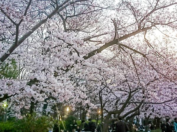春が来た!!_1