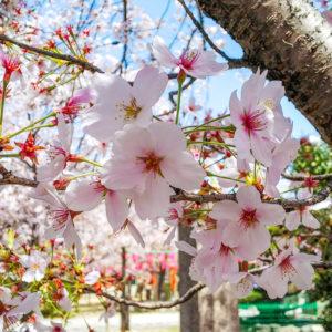 春がゆく_3