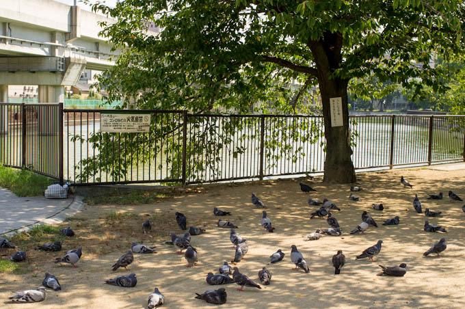 鳩の熱中症対策
